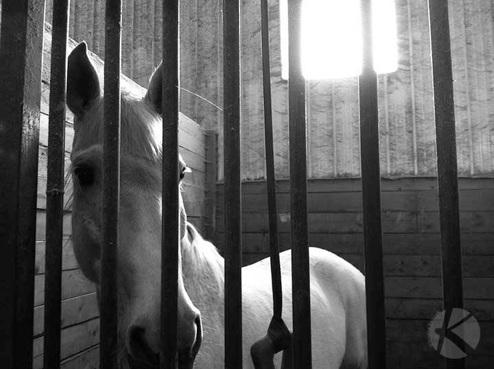 Horse_CagedAngel_KVerbeek web