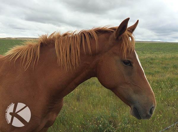 IMG_4553_KVerbeek_Horse_web