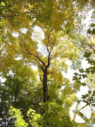 IMGP4161_KVerbeek_Tree_web